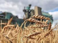 State Set Grain Prices Supported by Kurgan Oblast Agrarians