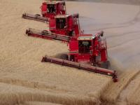 Ruin of Harvest in Russia Will Shake World Markets