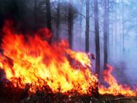 The Itera company got burned in the forest